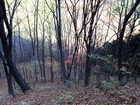 都民の森PB130985.JPG