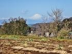 畑の上の富士P2172436.JPG